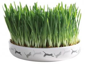 Trixie Ceramic Bowl for Cat Grass