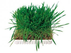 TRIXIE Small Animal Grass